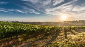 La Région Occitanie met sur pied une foncière agricole