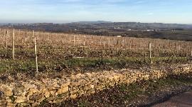 Les producteurs de Bourgogne en Beaujolais se défendent