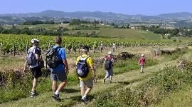 Le label Unesco «Geopark Beaujolais» en bonne voie