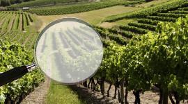 Les contrats de vins de France passés au peigne fin