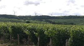 Eoliennes à Chablis, les vignerons disent non