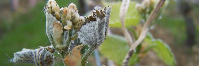 Après les températures inférieures à zéro, ce sont les potentiels de récolte 2017 qui sont aussi sous le signe négatif.