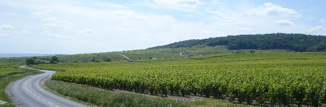 La non-mixité de production dans l'aire de Champagne et sur un cordon de communes a été approuvée à la fois par le SGV et le Syvif.