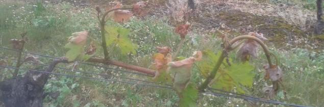 Viticulture oenologie viticulture plus de la moiti for Chambre agriculture gironde