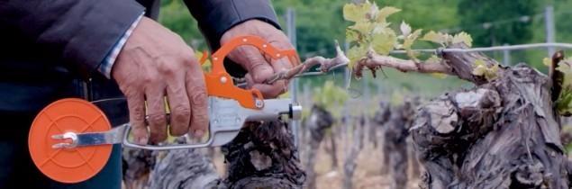 20aa3fd2d607f Coutale vient de mettre au point une pince manuelle pour lier la vigne.  D ores et déjà disponible