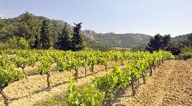 4 hectares supplémentaires en Gigondas pour Gabriel Meffre
