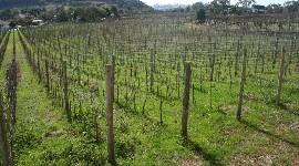 Sur plus de 10 000 hectares souhaités, 4 700 pourraient être autorisés
