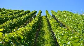 Consulter et comparer le prix des terres de vignes