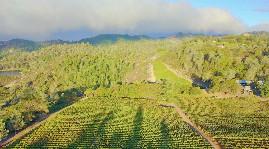 Axa Millésime investit en Napa Valley