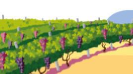 Les réussites des transitions démographiques et agroécologiques du vignoble sont liées
