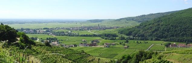 En Alsace, les premiers crémants doivent être vendangés ce 22 août.