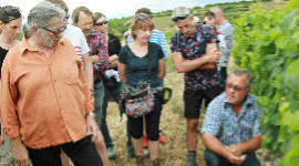 60 hectares participatifs pour les Vignerons d'Ardèche
