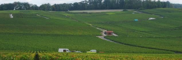 Pendant les vendanges, la Champagne embauche 110 000 saisonniers pendant 15 jours