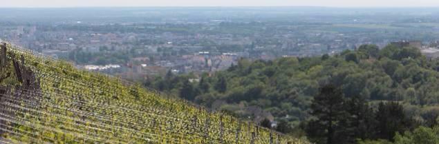 Le domaine de La Cras, propriété du Grand Dijon, est conduit par un vigneron en biodynamie