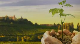 2015, année de solidarité viticole