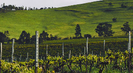 Le groupe chinois Changyu rachète Kilikanoon Wines