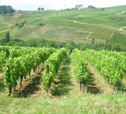 Du jamais vu : hausse de 3,6% du prix du foncier viticole