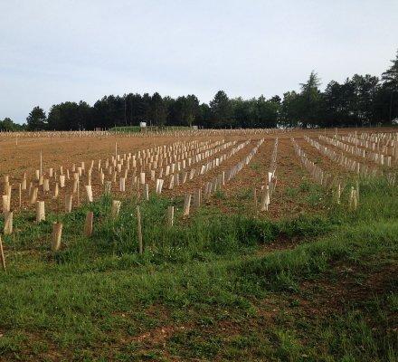 Option zéro : le bassin Sud-Ouest ne demande aucun contingent de plantations nouvelles