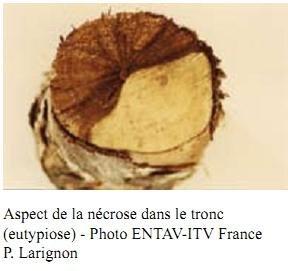 Lutte contre les maladies de la vigne : 40 000 ceps ramassés à Bourgueil