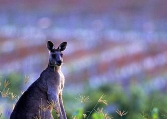 La production australienne délaisse la bouteille pour s'orienter sur les vins en vrac