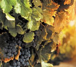 Investissements chinois : en recul en 2012, ils représentent moins de 1 % du vignoble bordelais