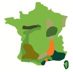 Aide à la restructuration du vignoble : les stratégies régionales validées