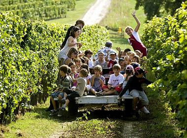 Pédagogie viticole : les petits à l'école de la vigne