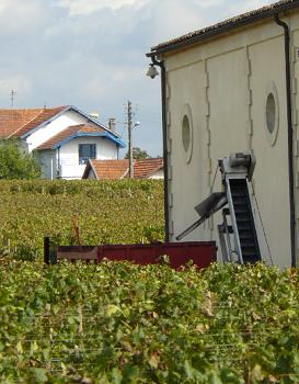 Bordeaux : l'urbanisation s'immisce entre les rangs de vignes