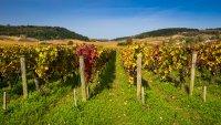 L'Histoire et Le patrimoine du vignoble Girondin au service de l'oenotourisme