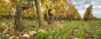 Matinées technique sur les couverts végétaux : intérêts et limites