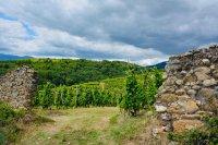 Escapade Vigneronne à Condrieu, domaine Niero