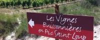 Les Vignes Buissonnières en Pic Saint Loup