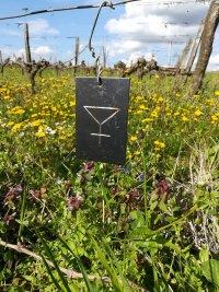 Chenins séparés : disparition d'Anne Graindorge