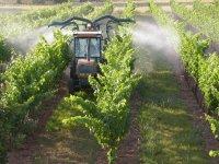 Avis d'expert : l'Europe participe à la promotion des vins français dans les pays tiers
