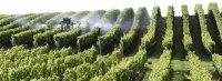 Marcillac : un couteau fait de nouveau rimer âme d'Aveyron et lame de vigneron