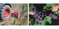 Ce que la viticulture bio économise en phytos, elle le perd en main d'oeuvre et mécanisation.