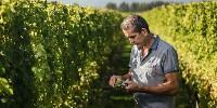 Chez Pernod Ricard, Patrick Materman a étudié de près la conduite du vignoble pour réduire le potentiel alcoolique