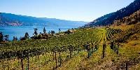 Le Canada connaît un développement rapide de son vignoble ces dernières années, principalement localisé en Ontario (6800 ha), en Colombie Britannique et dans une moindre mesure au Québec (800 ha) et en Nouvelle Ecosse (320 ha). En photo, la vallée du l'Okanagan, en Colombie britannique