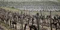Pour 2016, lors du lancement des nouvelles autorisations de plantation, le vignoble charentais avait initialement posé des demandes par filière (125ha pour les moûts et VSIG, 85ha pour le vin de pays, 35ha pour Cognac, 5ha pour Pineau…).
