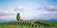 Saint-Félix-Saint-Jean est plutôt spécialisée dans le vrac alors que Saint-Saturnin privilégie la vente en bouteille avec des vins exportés en Europe et en Asie mais également commercialisés par la grande distribution.