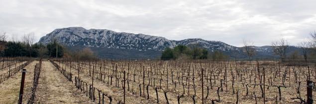Un an à peine après avoir obtenu l'AOP, l'appellation Pic Saint Loup attend le jugement du Conseil d'Etat. Son décret est en effet contesté par un groupe de vigneron.