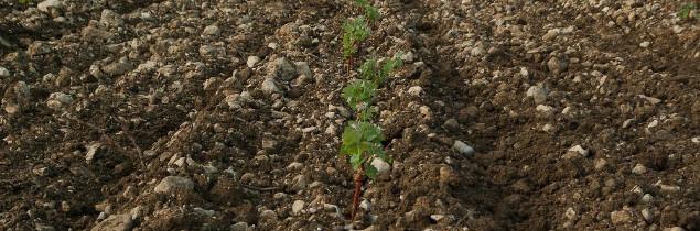 Le vignoble français s'étend actuellement sur 810 000 ha.