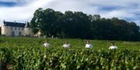 Les quatres amies étudiantes ont participé en septembre 2018 aux vendanges en Bourgogneau Domaine Coste Caumartin – Pommard