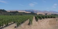 On est loin de l'image d'une Nouvelle-Zélande verdoyante. Les sols sont secs et l'irrigation menacée.