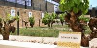 La Maison Labastide mise notamment sur les cépages ancestraux gaillacois tels que le Loin de l'oeil.