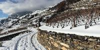 Avec moins de 14700 hectares, le vignoble suisse est équivalent à celui alsacien.
