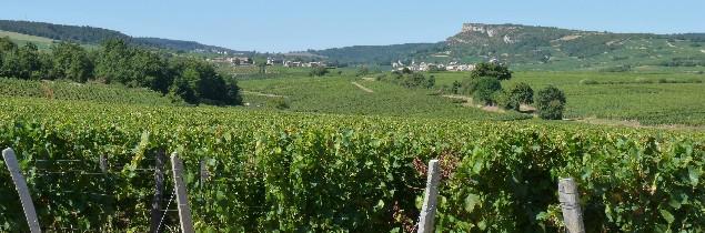 S'il n'y a pas de changement, 22 premiers crus devraient voir le jour d'ici 2019 dans le vignoble de Pouilly-Fuissé