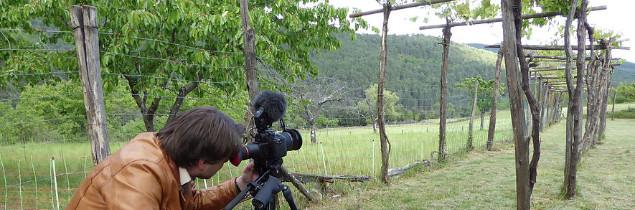 Soutenant le film, l'Association des Fruits Oubliés milite pour professionnalisation de la production de vins de cépages interdits (actuellement tolérée à titre amateur).