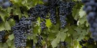 D'après l'INV, le vignoble argentin s'étend sur 224000 hectares, pour 881 bodegas.