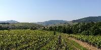 A Lantignié, une trentaine de vignerons se sont regroupées dans une association, Vignerons et terroirs, visant à mieux valoriser leur terroir, 'noyé' dans l'appellation régionale